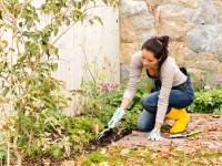 6 Fall Gardening Tips