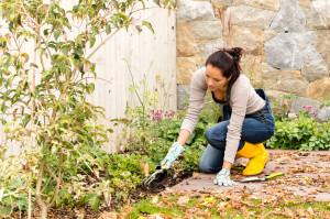 garden tips fall