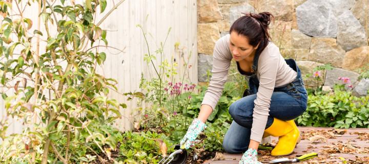 6 Fall Gardening Tips UpFront Ottawa