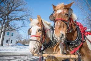 horses winter