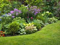 Top 10 Perennials for Ottawa