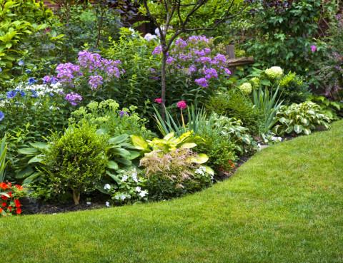 Top 10 Perennials for Ottawa