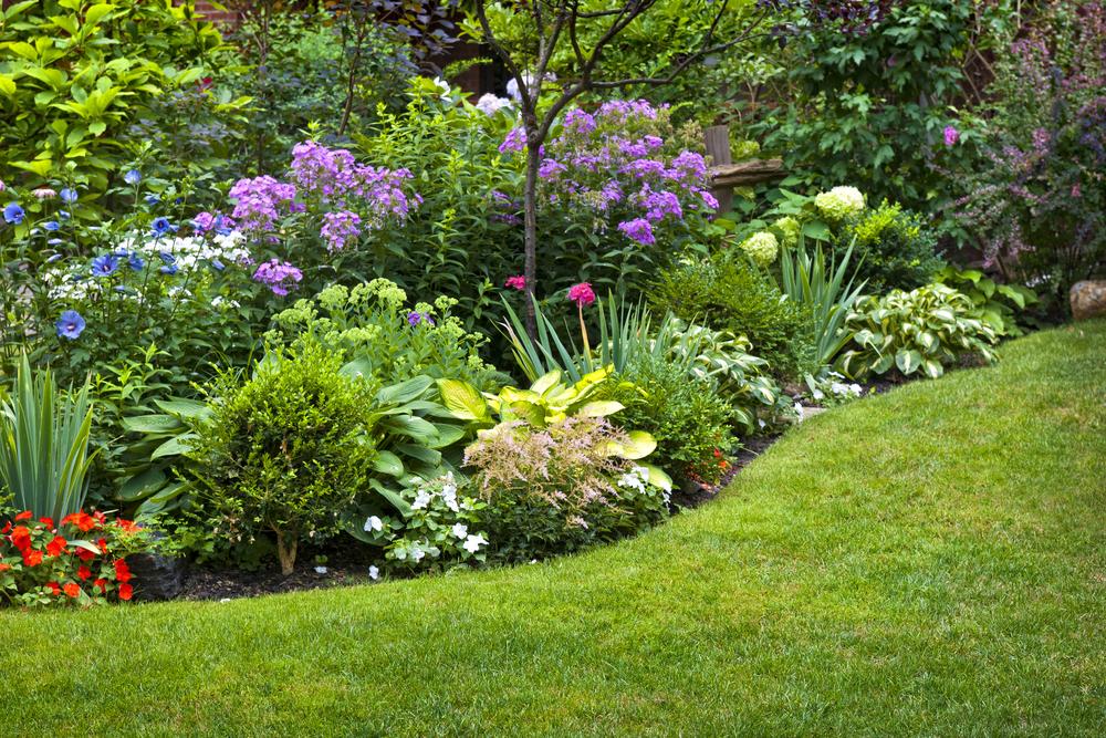 Top 10 Perennials For Ottawa Upfront Ottawa