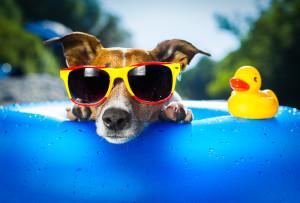 how to handle heat wave