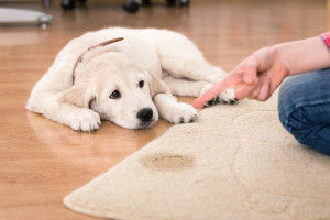how to protect and clean rugs tips for homeowners
