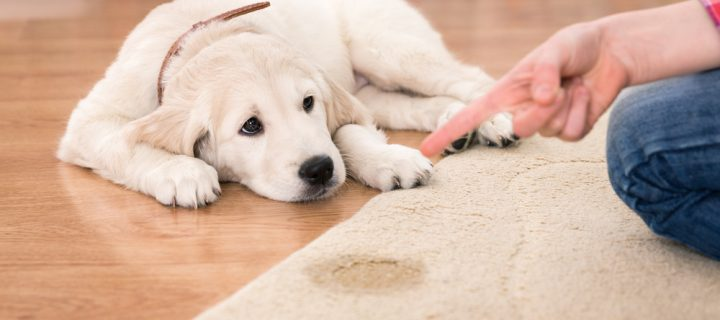 How to Protect and Clean Rugs: Tips for Pet Owners