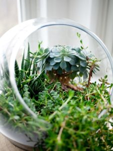 Terrarium for greenery