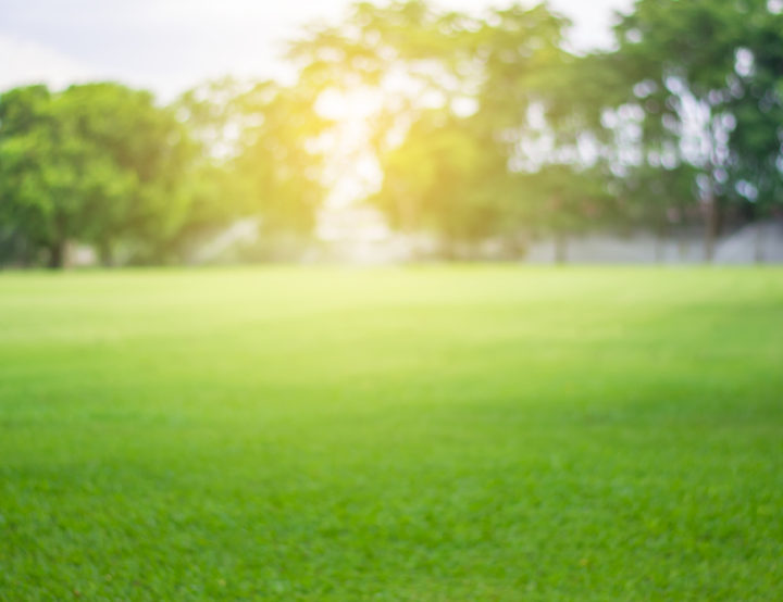 Grow a Beautiful Lawn This Summer with these Spring Steps