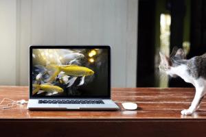 consumer laptop 2018