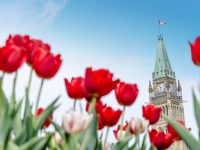 What To Do In Ottawa: Victoria Day Weekend Edition