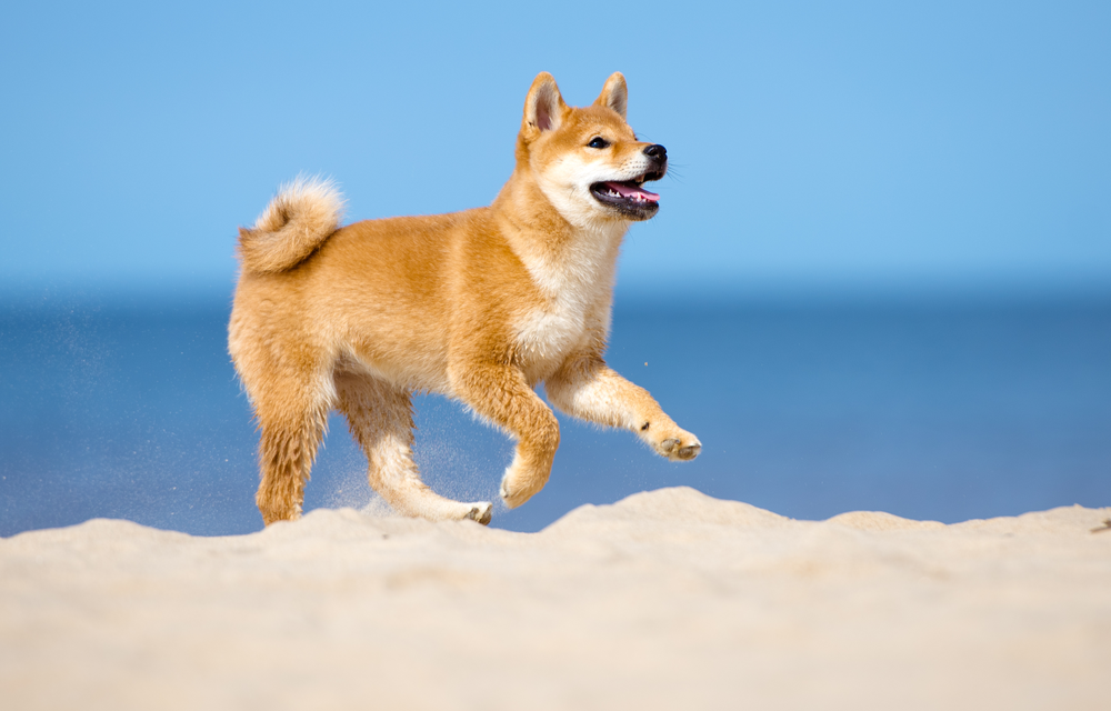 Thinking of Getting a Dog? Consider These Breeds! - UpFront