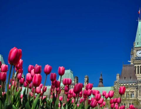 11 Things To Check Off Your Bucket List In Ottawa This Summer