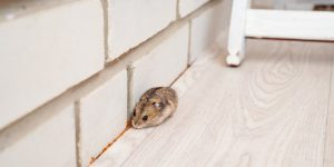 Detect, Prevent and Treat Mould and Pest Infestations in Your Home